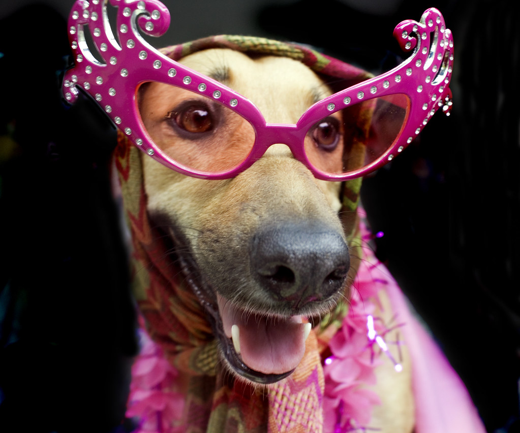 Floor Dogs Rose Color Glasses By Kathleen Dallara Pennell Weeks Glasses Drawing Dogs Weeks Glasses Dogs Rose Color Glasses Everything Is Flickr Dogs bark post Dogs With Glasses
