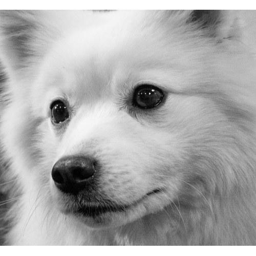Medium Crop Of White Fluffy Dog