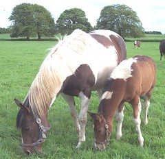 The Equisal Tapeworm Test can Benefit any Horse