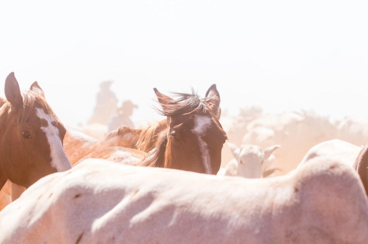 Troperos de la estancia dentro de la cual se encuentra la Reserva Morombí, arrean ganado rumbo a la tranquera. (Tetsu Espósito)