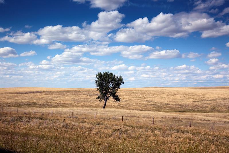 Highsmith, Carol M, photographer. Rural scene, South Dakota. 2009. Image. Retrieved from the Library of Congress; public domain