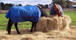 Horse Rugs are Otherwise Known as Blankets