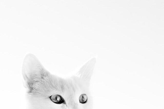 Heads up ! by Flickr user Villi.Ingi