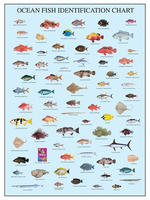 Sea fish names funny fish names 2017 fish tank maintenance for Ocean fish names