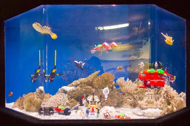 New Zealand   Auckland   Aquarium | Flickr   Photo Sharing!