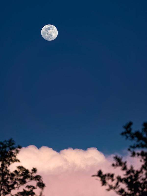 Pretty moon tonight