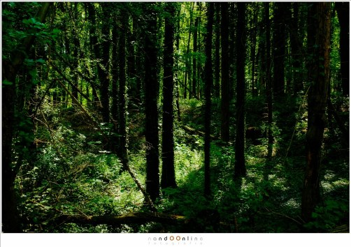 Zonlicht in het dichte bos (ISO200 - f/11 - 1/20 sec, Velvia film simulation)