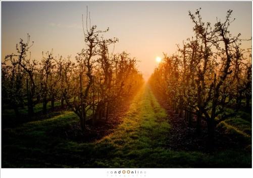 Appelboomgaard vlak na zonsopkomst. Single exposure shot in RAW, bewerkt in Lightroom (ISO200 - f/8 - 1/400, Velvia film simulation)