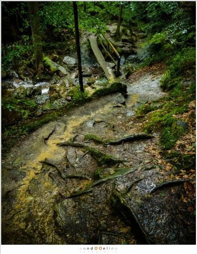 Het regenwater stroomt naar beneden, waar een smalle houten brug de overtocht naar de andere oever van de Ninglinspo mogelijk maakt. Modder stroomt mee en alleen de wortels zorgen voor enige grip (18mm - (auto)ISO12800 - f/8 - t=1/40sec)