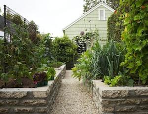 Susan Heeger's vegetable garden in Los Angeles.