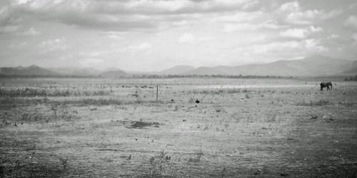 The Wandering Elephant