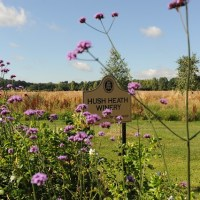 Great Day Out + Great Wines Too | Hush Heath Estate & Winery