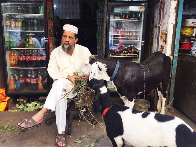 City Faith - The Ballad for the Eid Goats, Old Delhi
