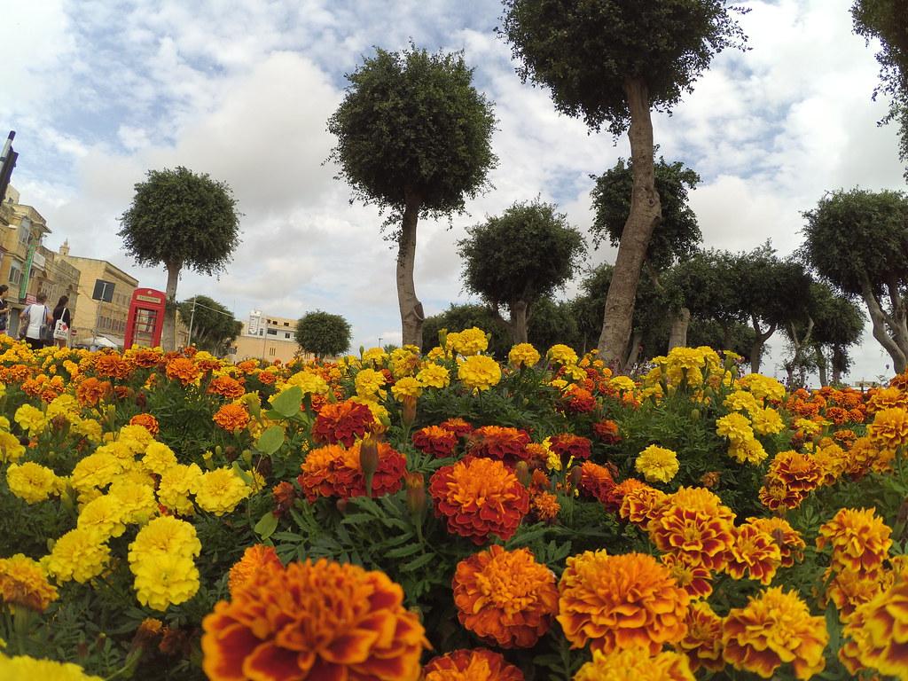 Flores em Victoria - Bus Terminal