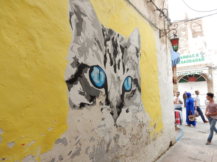 Cat in Essouira