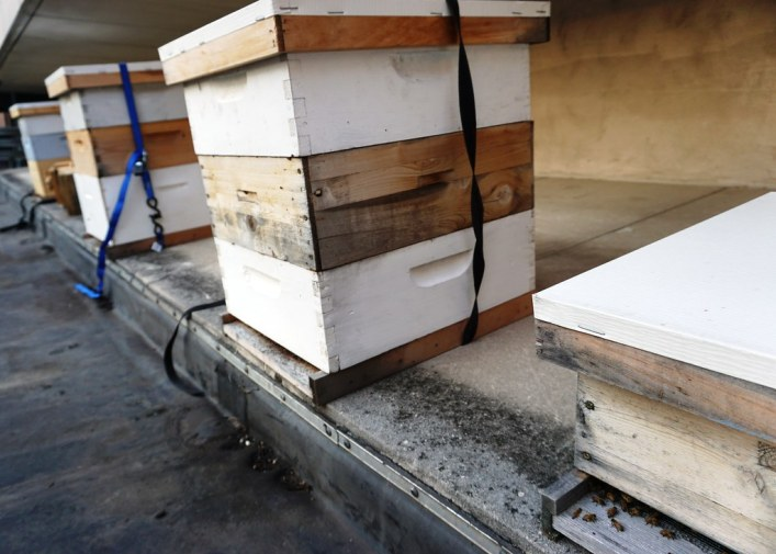 Honey Bee Hives at Sofitel Philadelphia's Rooftop Garden, June 2016