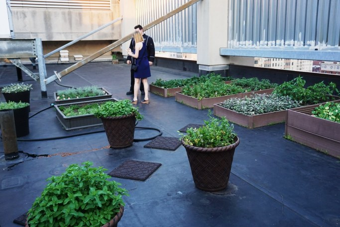 Sofitel Philadelphia's Rooftop Garden, June 2016