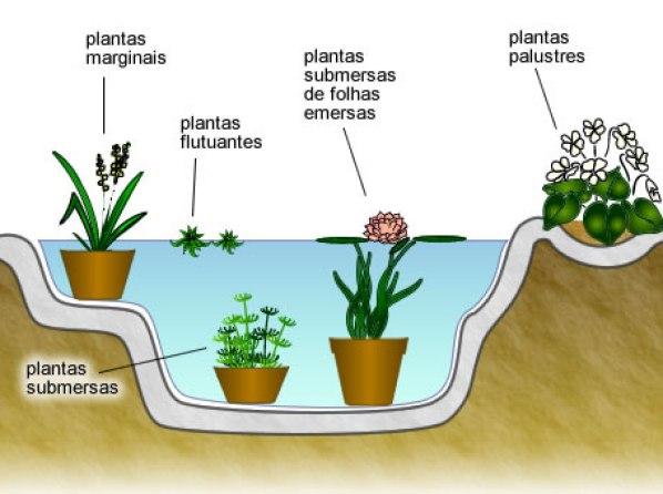 plantas para lagos