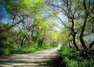 promenade-caleches-camargue-chemin