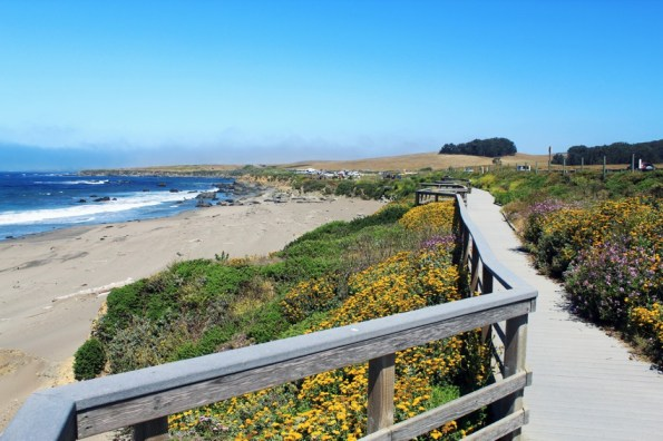 elephant seal viewing area in san simeon