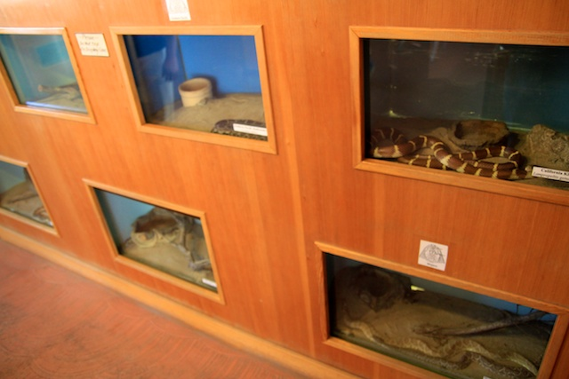 Snakes at the visitors center