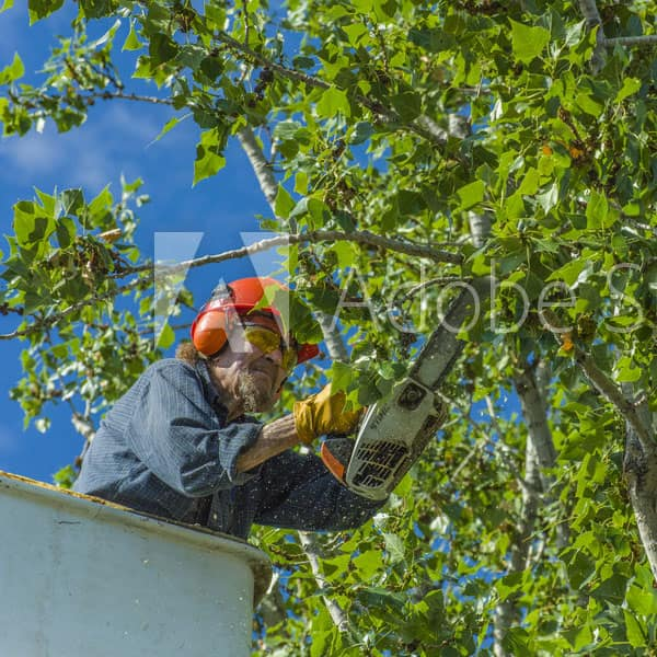 Tree Removal | Limb Removal & Disposal