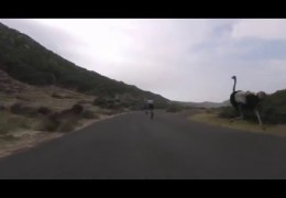 Cyclists chased by an ostrich in South Africa! Hilarious & Terrifying!