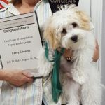 """Casey Edward's"" Puppy Kindergarden Graduation"