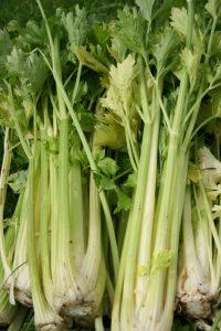 celery-camelcsa