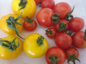 tomatoes-camelcsa-050716