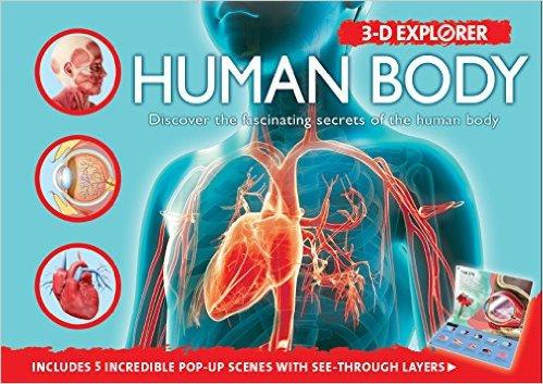 3-D Explorer Human Body for Silver Dolphin Books by Camilla de la Bedoyere