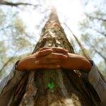 SILVOTERAPIA : Abbracciare gli alberi per ritrovare il benessere
