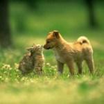 I nostri amati ANIMA-LI sono esseri che per definizione contengono un' anima