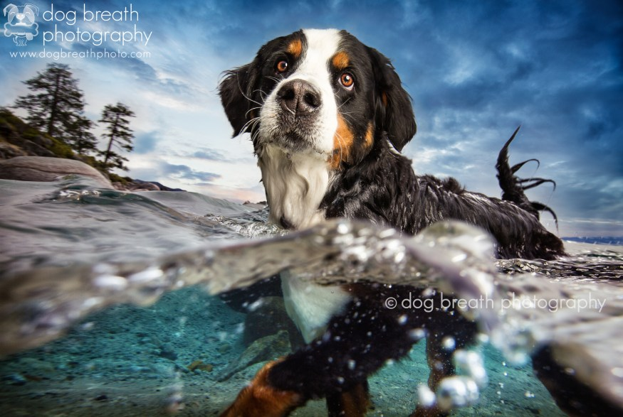 dog-breath-photography-kaylee-greer-29-cotw