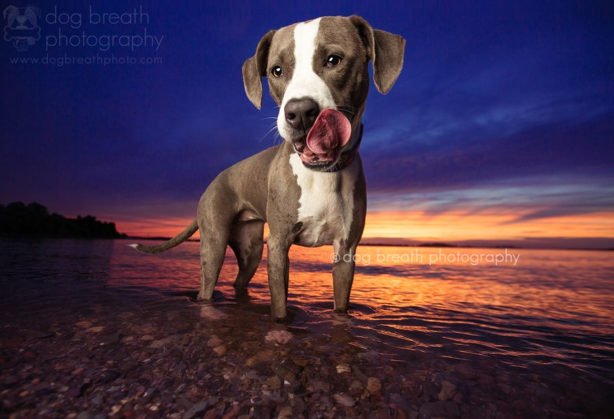 dog-breath-photography-kaylee-greer-40-cotw