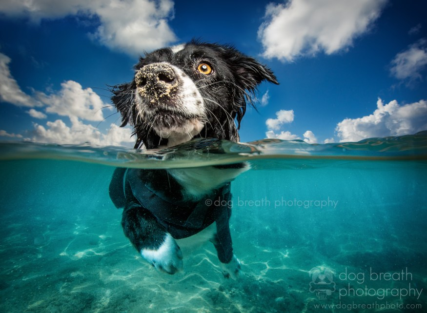 dog-breath-photography-kaylee-greer-43-cotw