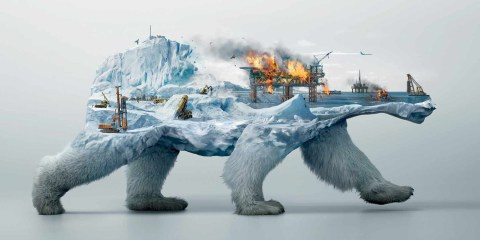 illusion_robin_wood_polar_bear_poster_cotw