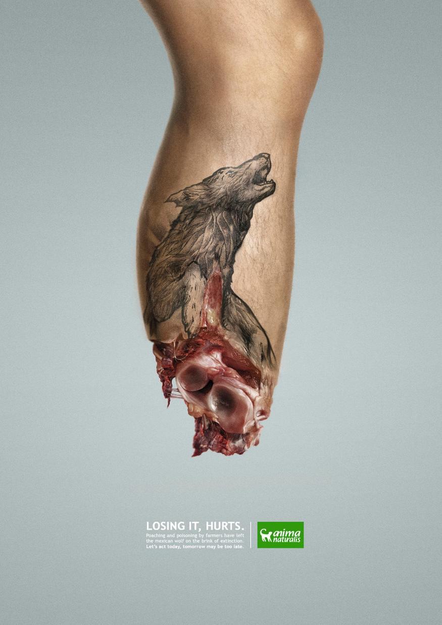 AnimaNaturalis-hurt-wildlife-2