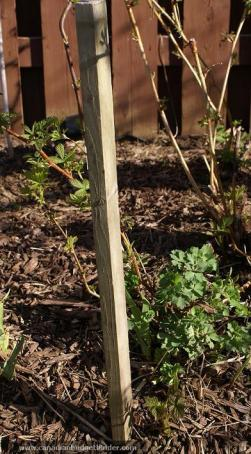 Stake Your Vegetables In Garden