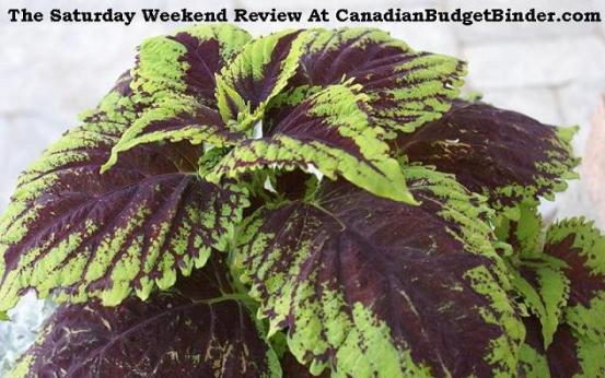 he-Saturday-Weekend-Review