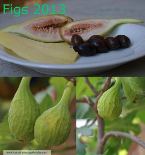 Figs-2013-on-tree-and-on-plate