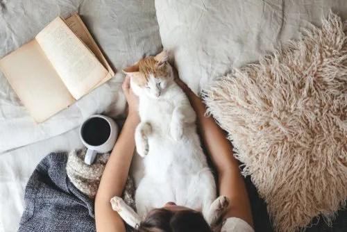 猫とのふれあい