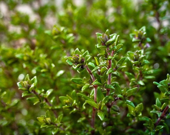 4 Fresh & Powerful Herbs to Cook With Tonight