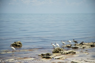 """Beach Patrol"" on the rocky shore"