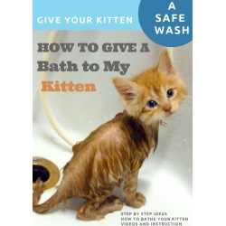 Small Crop Of How To Bathe A Kitten