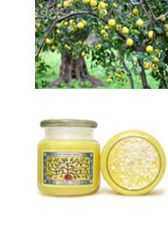 Lemon Tree Scented Candle from For Every Body