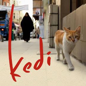 kedi-foto1