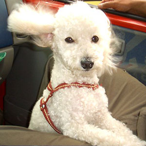 Safety Pet Travel Seats