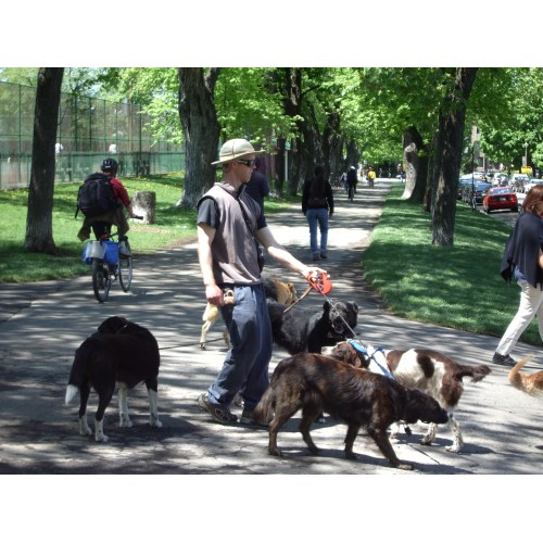 Medium Crop Of Dog Trainer Salary