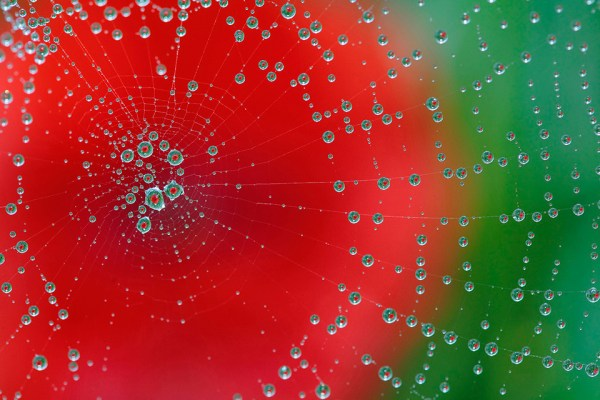 Dew on spiderweb